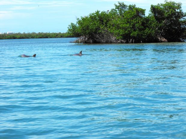 Dolphins Key West