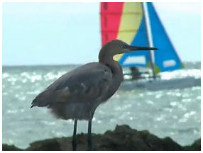 Sailing Key West