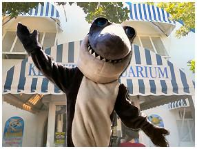 Mascot Shark