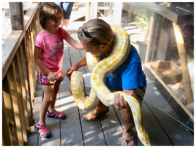 Snake interaction at the Key West Aquarium