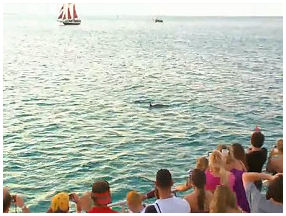 Dolphin Watching Dinner Cruise