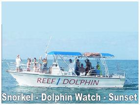 Dolphin Watch Key West