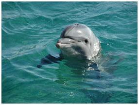 Dolphin Triple Combo