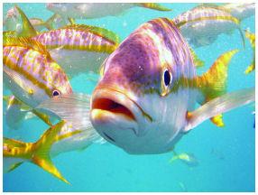 Exotic Fish Key West
