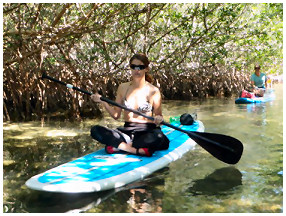 Paddleboard Eco Tours in the Florida Mangroves