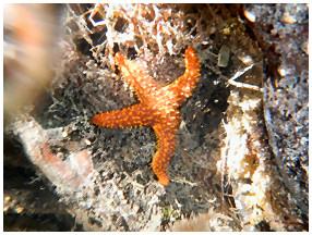 Paddleboard Eco Tours starfish