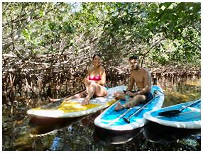 paddleboard in mangroves