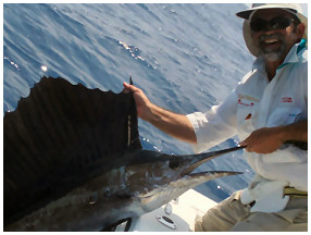 Sailfish fishing Key West