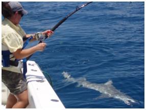 Catch a shark in Key West